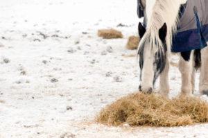 cibo per cavalli - fieno in stalla