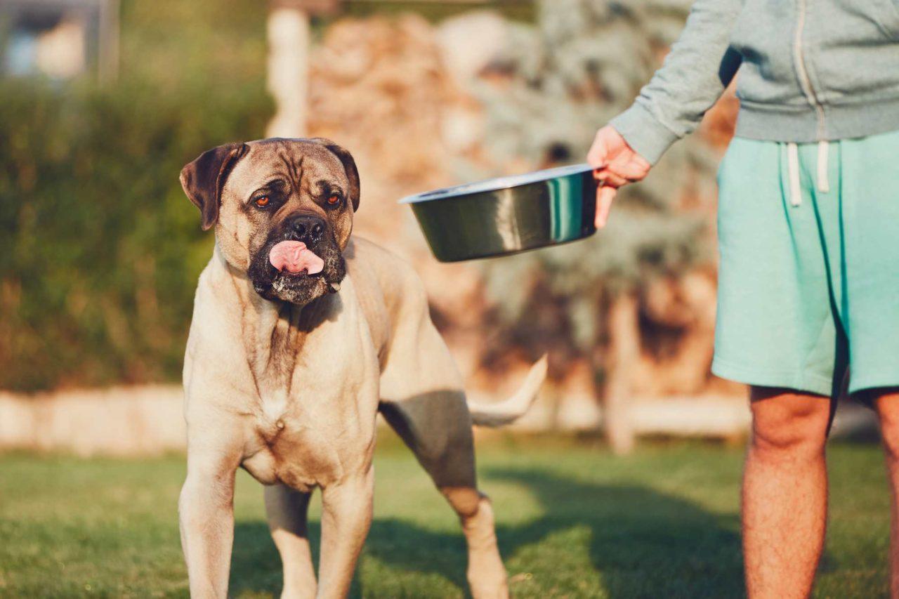 Dar da mangiare al cane: la giusta alimentazione