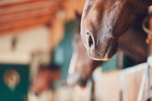 Consigli per alimentazione del cavallo