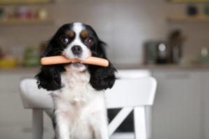 mangimi per cani e non solo - viziare il cane