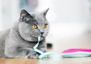 come educare un gatto: i gatti e il gioco