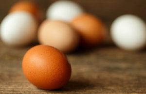allevare galline ovaiole per ottenere uova fresche
