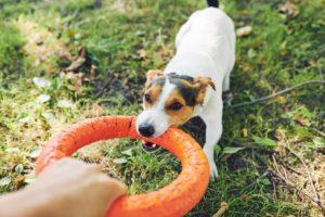 crescere un cane attività fisica