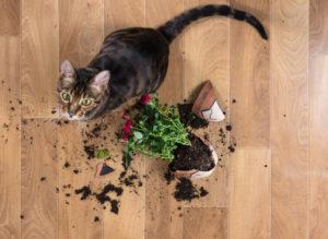 come educare un gatto: non sgridarlo o picchiarlo
