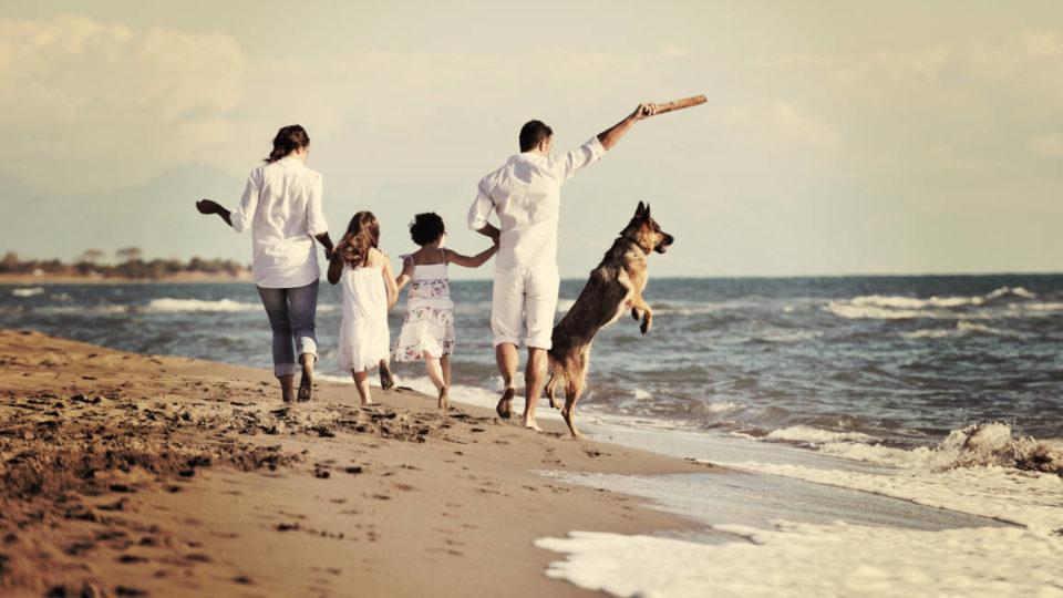 responsabilità e impegni nel crescere un cane