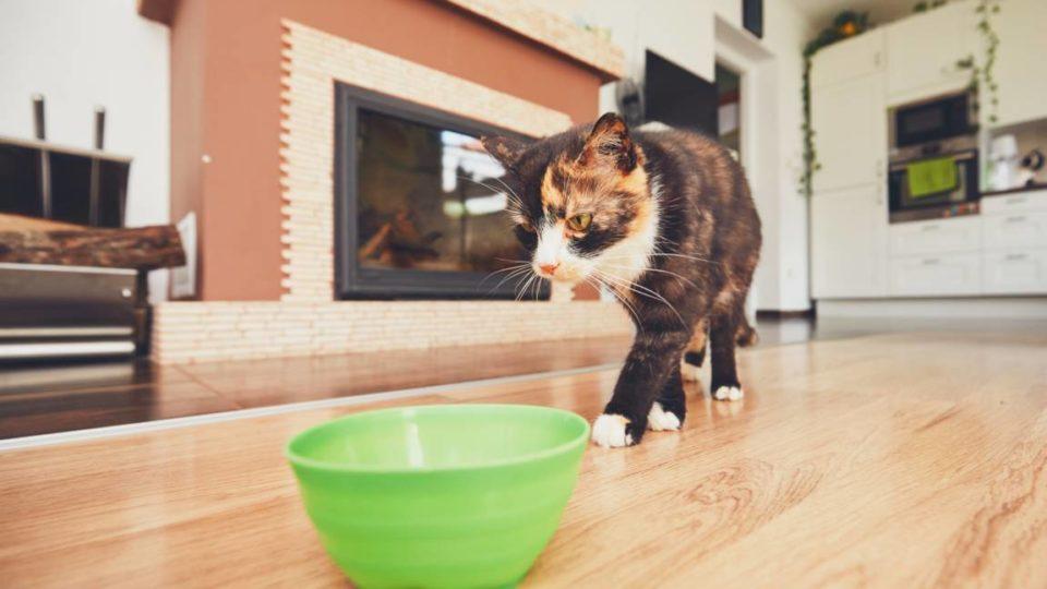 cioo per gatti crocchette nella ciotola
