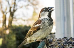Cosa mangiano gli uccelli ?