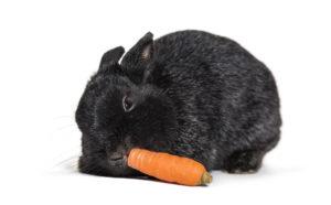 Cosa mangiano i conigli? Le carote