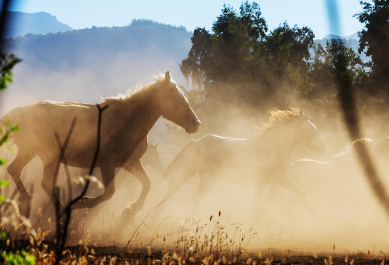 migliori razze di cavalli