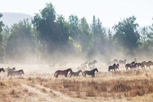 razze di cavalli più diffuse