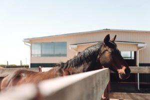 Spazio necessario per allevare un cavallo