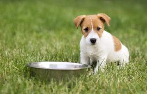 Cosa deve essere presente nell'etichetta delle migliori crocchette per cani
