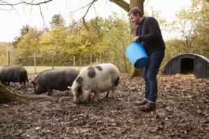 cosa mangiano i maiali in base al loro peso