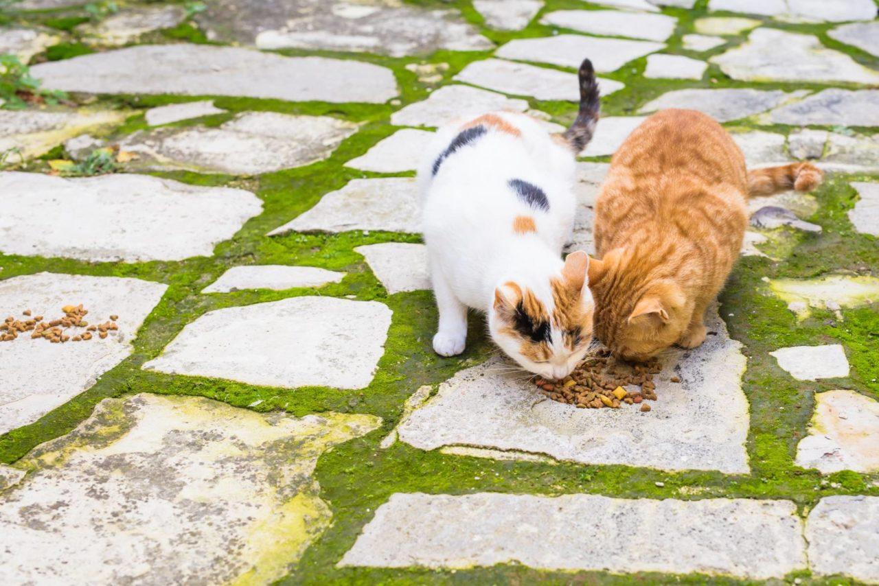 i migliori croccantini per gatti