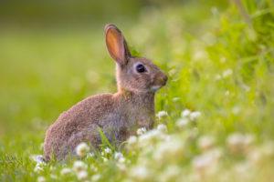 cosa mangiano i conigli da allevamento