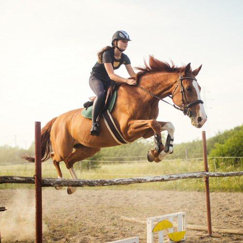 Il cavallo da scuderia in salute 500x500 - Giardini Mangimi
