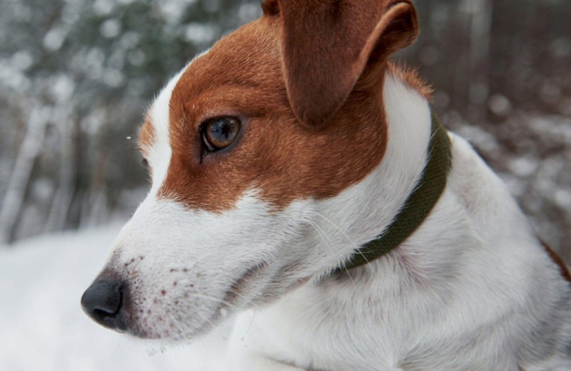 La vista dei Cani OK - Curiosità su Animali - Giargini Mangimi